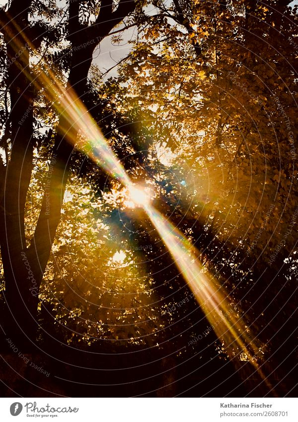 autumn day Nature Spring Summer Autumn Tree Park Forest Illuminate Brown Yellow Gold Gray Green Orange Black White Deciduous tree Branch Leaf Colour photo