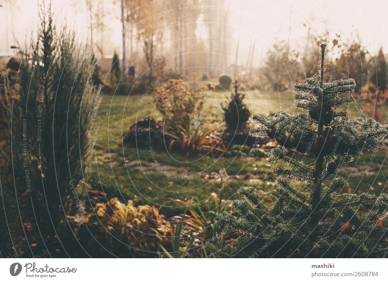 fog in early morning in late autumn or winter garden Beautiful Winter Garden Nature Landscape Plant Autumn Weather Fog Tree Grass Natural Green White cold