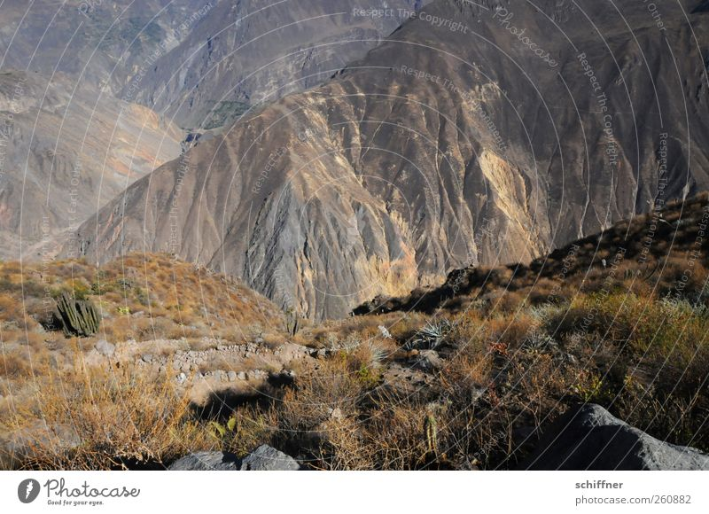 The way to Canossa Nature Landscape Elements Earth Rock Mountain Exceptional Slope Badlands Dry Steep Deep Tall Go up Effort Far-off places Brown Peru Andes