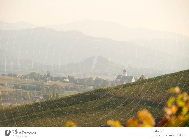 Autumn in Baden Nature Landscape Wine Vine Field Hill Mountain Relaxation Freedom Leisure and hobbies Joy Peace Religion and faith Power