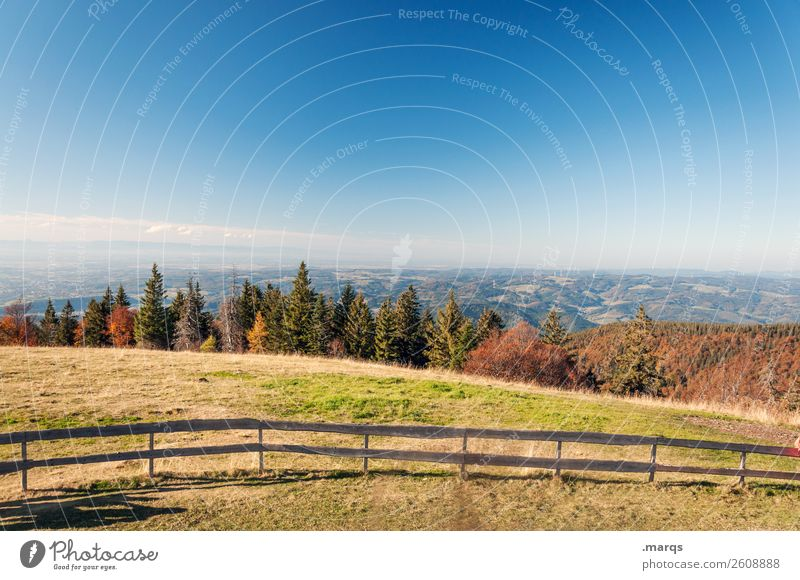 Candel light Tourism Trip Summer Hiking Nature Landscape Cloudless sky Autumn Beautiful weather Tree Meadow Forest Hill Relaxation Kandel Colour photo