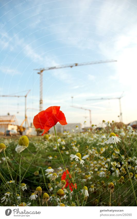 building flowers Flower Poppy Construction site Meadow House (Residential Structure) Green Clouds crane Sky Bright Evening Blue