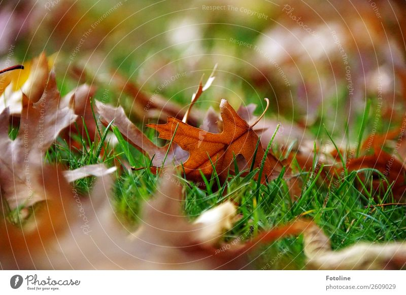 Autumn Environment Nature Plant Beautiful weather Grass Leaf Meadow Bright Near Natural Warmth Brown Green Autumnal Autumn leaves Autumnal colours Colour photo