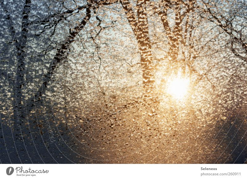 freezing rain Environment Nature Landscape Plant Water Drops of water Sky Cloudless sky Winter Weather Rain Ice Frost Snow Tree Forest Line Freeze Glittering