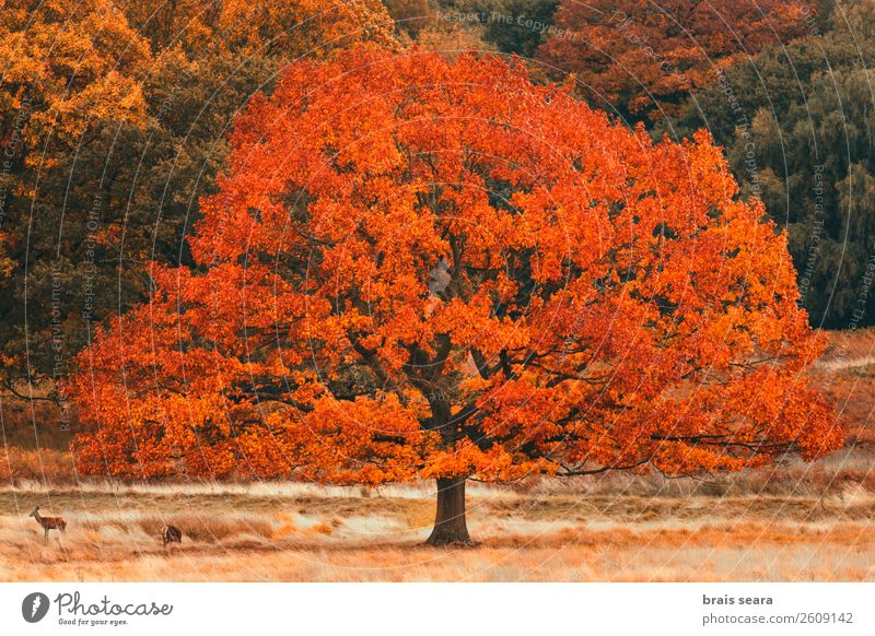 Tree with fall colors Nature Vacation & Travel Old Plant Colour Green Landscape Red Animal Leaf Calm Forest Yellow Autumn Environment