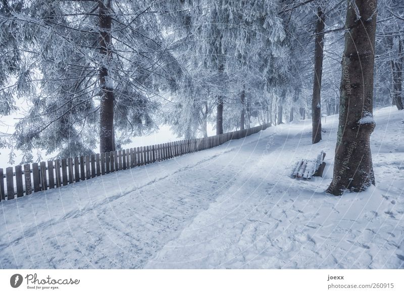 Limited prospects Nature Winter Ice Frost Snow Tree Forest Deserted Lanes & trails Bright Cold Gray Black White Leisure and hobbies Idyll Bench lattice fence