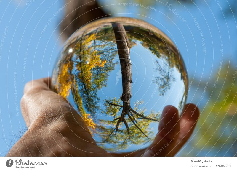 A glass ball of nature Beautiful Vacation & Travel Tourism Summer Hand Art Nature Landscape Earth Sky Autumn Tree Grass Leaf Park Forest Sphere Glittering