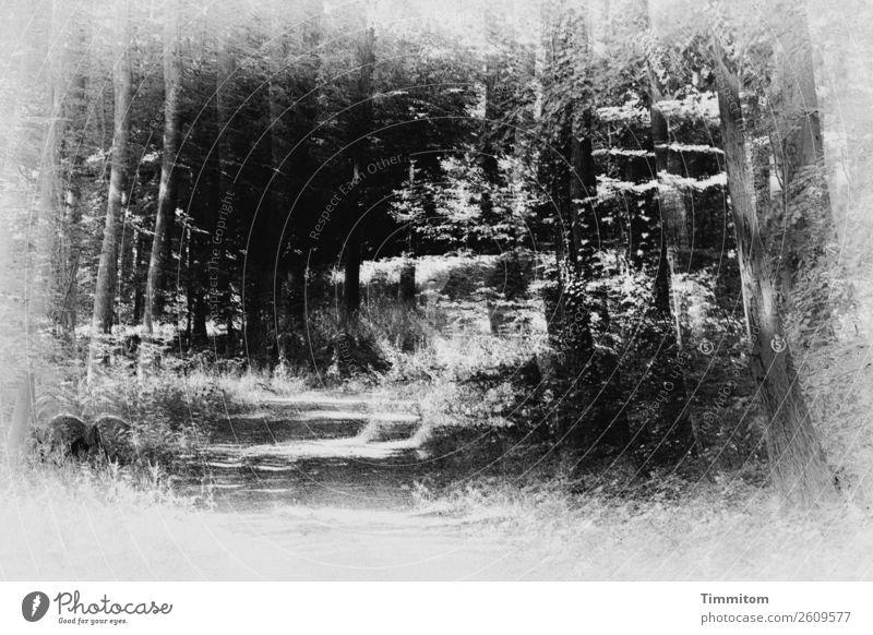 Nature White Tree Forest Black Environment Lanes & trails Gray Footpath Tree trunk Promenade Irritation