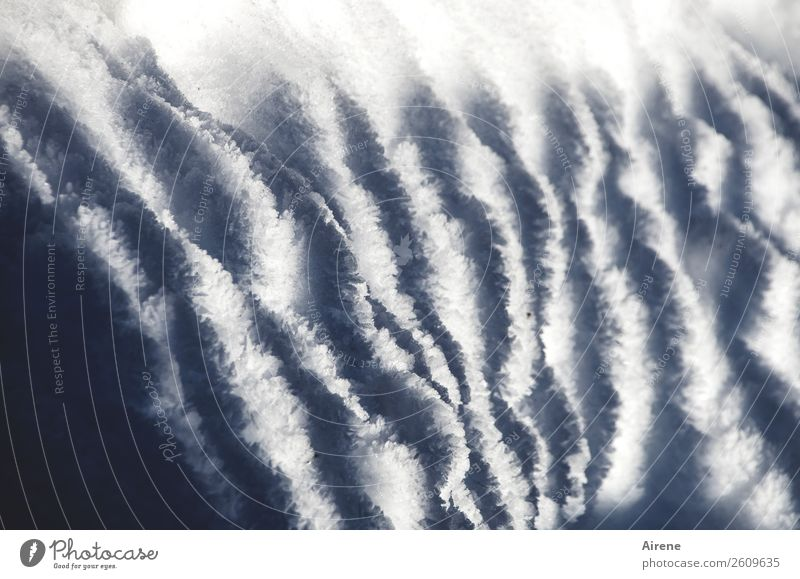 zebra winter Winter Snow Garden fence Fence post Stripe Pattern Freeze Cold Blue White Striped Zebra crossing Shadow Soft Snow layer Subdued colour Close-up