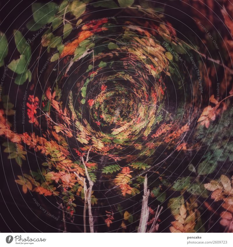 stormy Art Nature Autumn Storm Wind Gale Tree Forest Sphere Globe Rotate Flying Infinity Round Speed Movement Center point Whimsical Autumn leaves