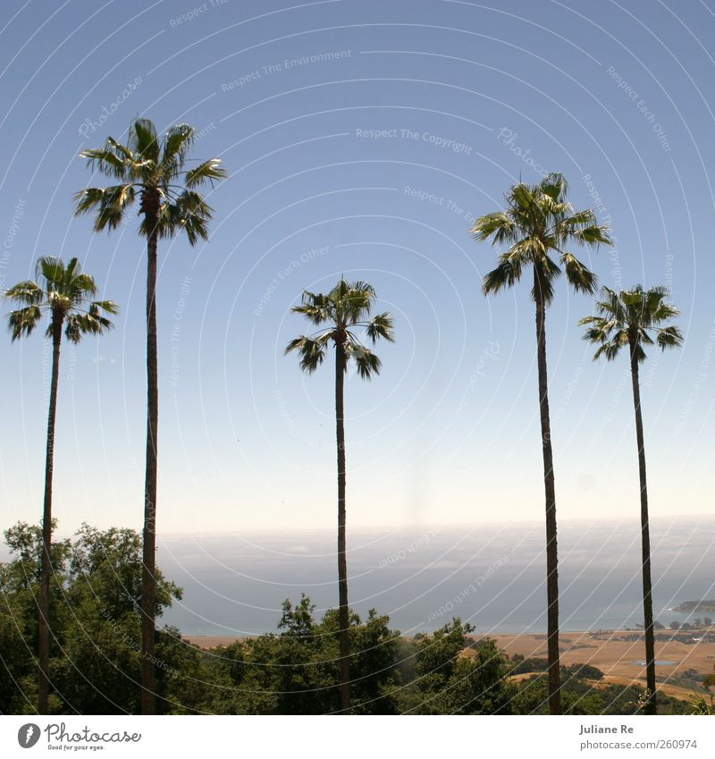Sky Blue Green Summer Sun Ocean Landscape Far-off places Coast Think Brown Horizon Dream Growth Elegant Free