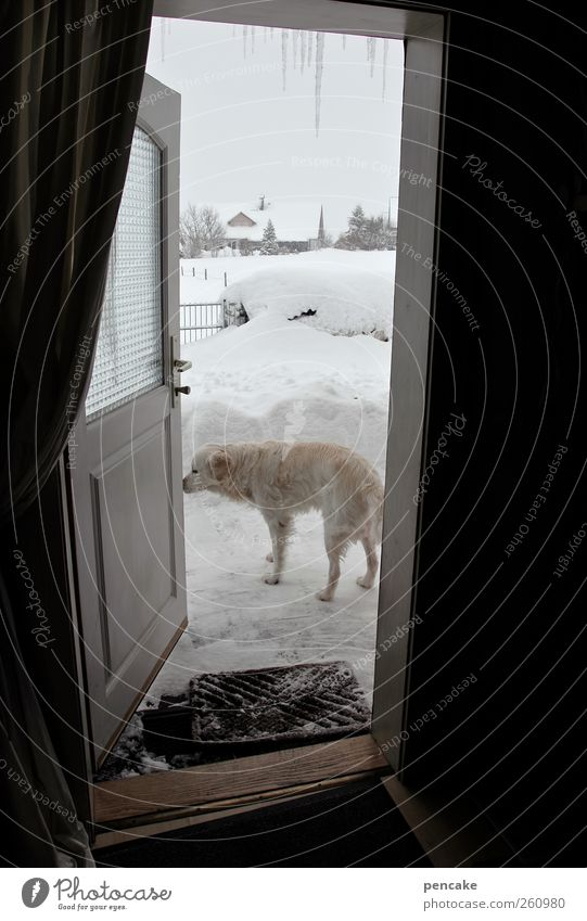 Dog Winter Animal House (Residential Structure) Cold Snow Door Weather Ice Authentic Frost Freeze Pet Icicle Figure of speech Duck down