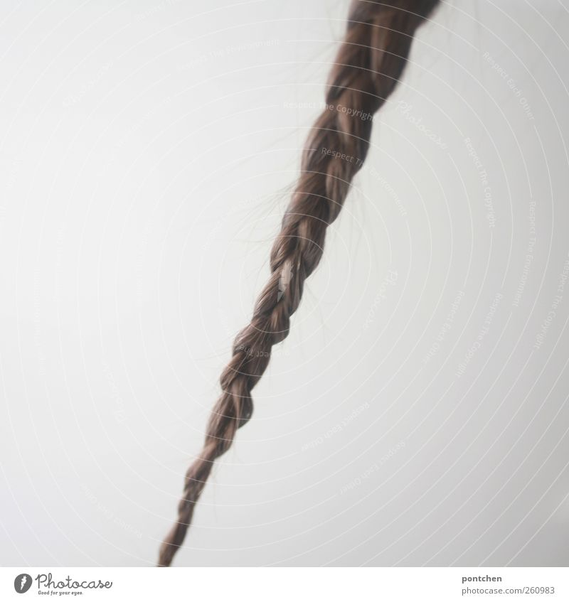Plaited plait in front of a white background. Hair and hairstyle. Female Hair and hairstyles brunette Long-haired braid Esthetic Wall (building) Rapunzel