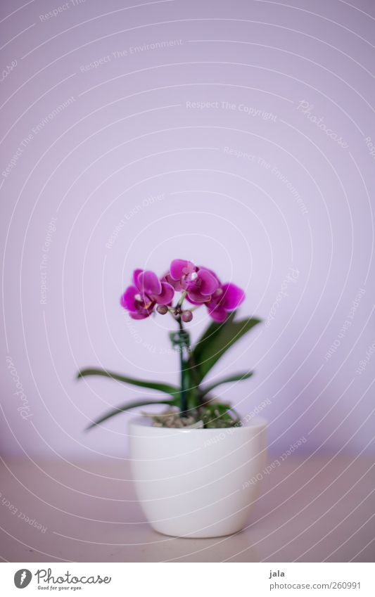 orchid Plant Flower Orchid Leaf Blossom Pot plant Exotic Esthetic Elegant Beautiful Green Violet White Colour photo Interior shot Deserted Copy Space top