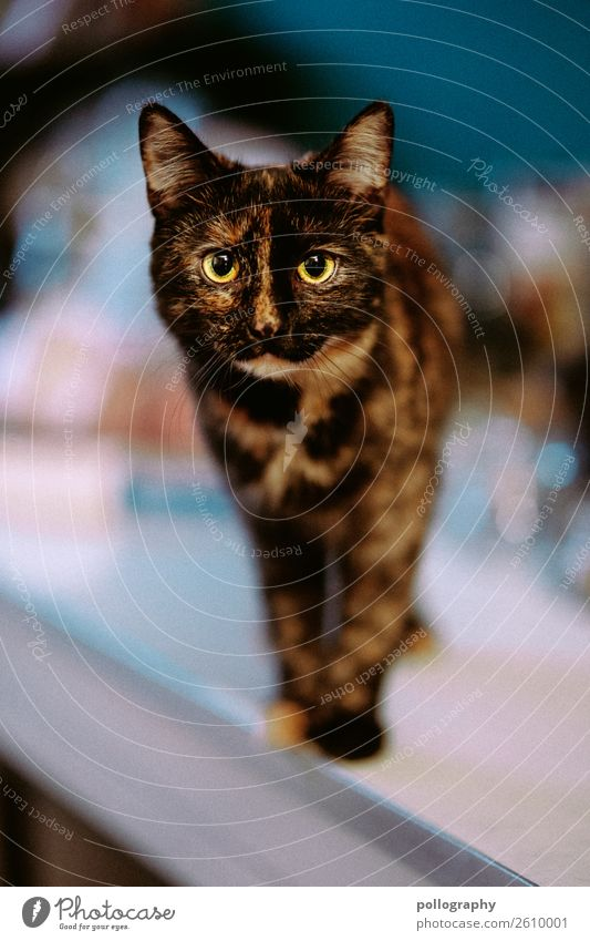 cat Pet Cat Animal face 1 Stand Soft Colour photo Interior shot Looking into the camera