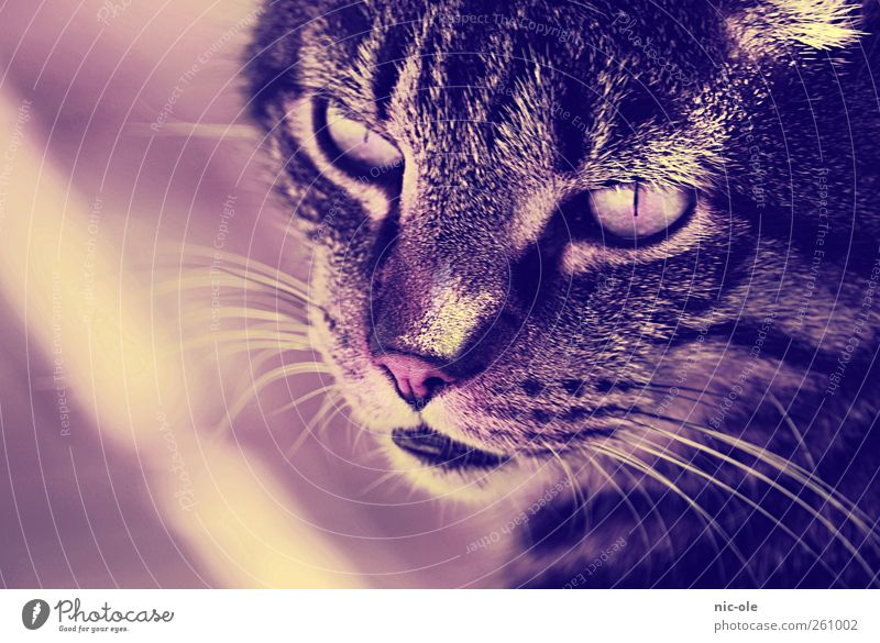 Cat Animal Calm Emotions Moody Cute Animal face Pet Willpower Patient Whisker Cat eyes Cat's head