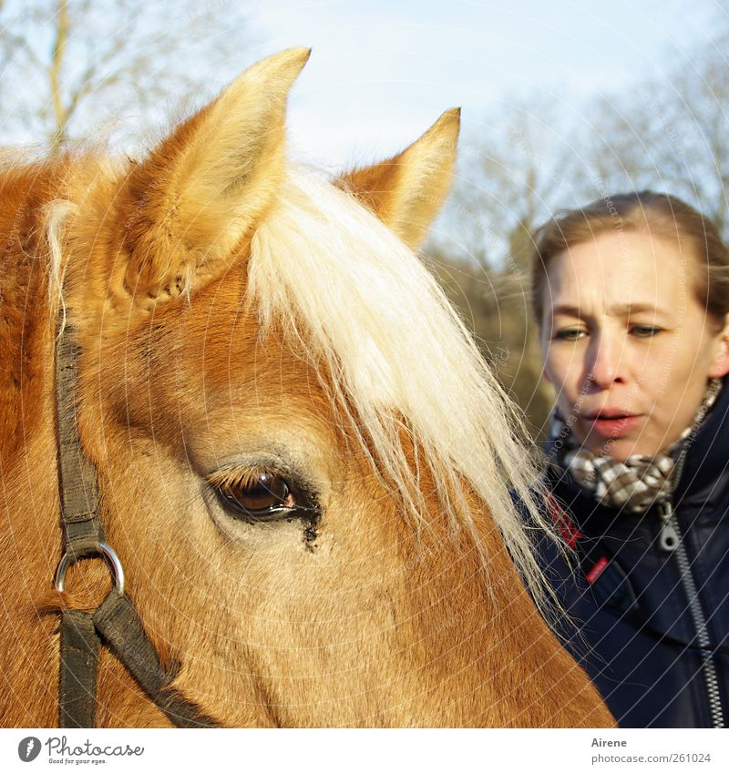Human being Woman White Animal Face Adults Head Friendship Brown Gold Horse Communicate Touch Friendliness Trust Positive