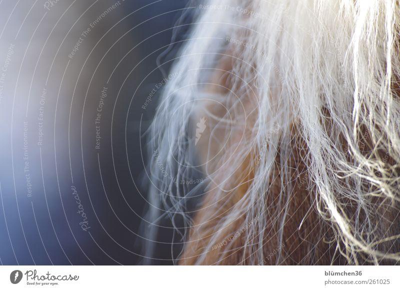 Beautiful Joy Animal Love Warmth Happy Jump Dream Brown Blonde Natural Leisure and hobbies Elegant Observe Horse Soft