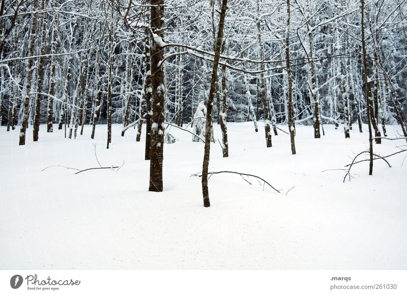 Black Forest Winter vacation Nature Landscape Climate change Ice Frost Snow Tree Cold Moody Tree trunk Snow layer Colour photo Exterior shot Deserted