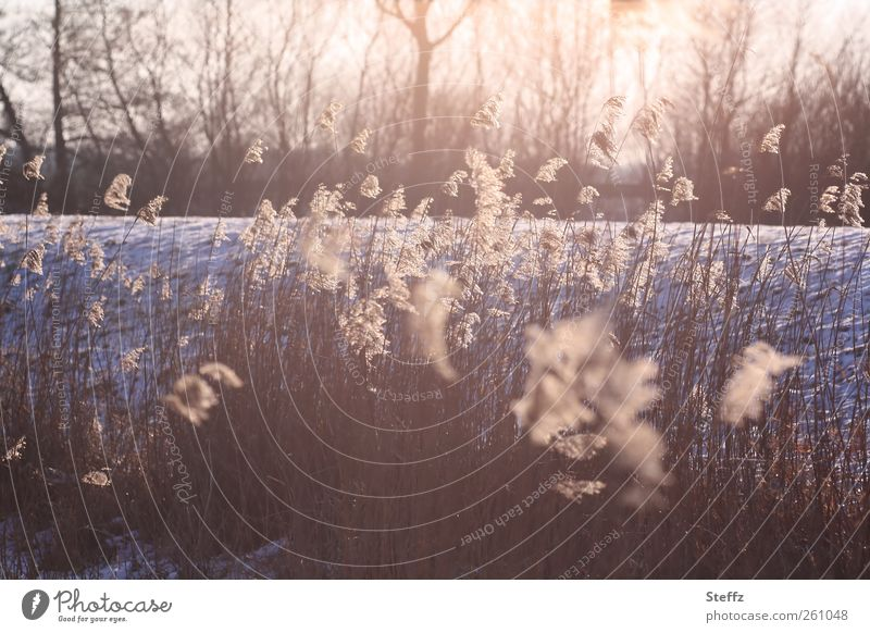 February light Environment Nature Landscape Elements Winter Weather Ice Frost Snow Plant Wild plant Cold Natural Beautiful Romance Attentive Watchfulness Calm