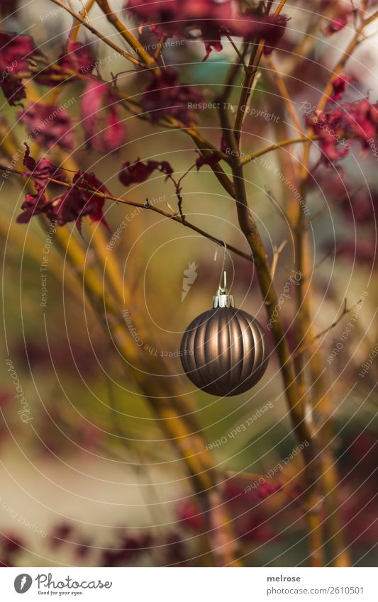 Christmas ball on maple tree Environment Nature Autumn Beautiful weather Plant Tree Leaf Maple tree Maple leaf Twigs and branches Park Glitter Ball Advent