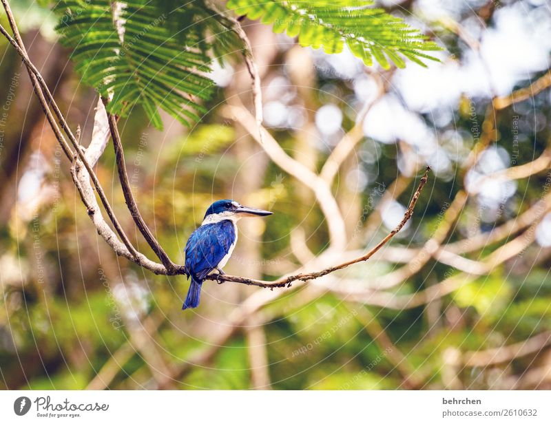 Vacation & Travel Nature Plant Blue Beautiful Landscape Tree Animal Leaf Far-off places Small Tourism Exceptional Freedom Bird Trip