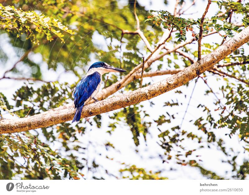 Vacation & Travel Blue Beautiful Tree Animal Leaf Far-off places Small Tourism Exceptional Freedom Bird Trip Wild animal Adventure Feather