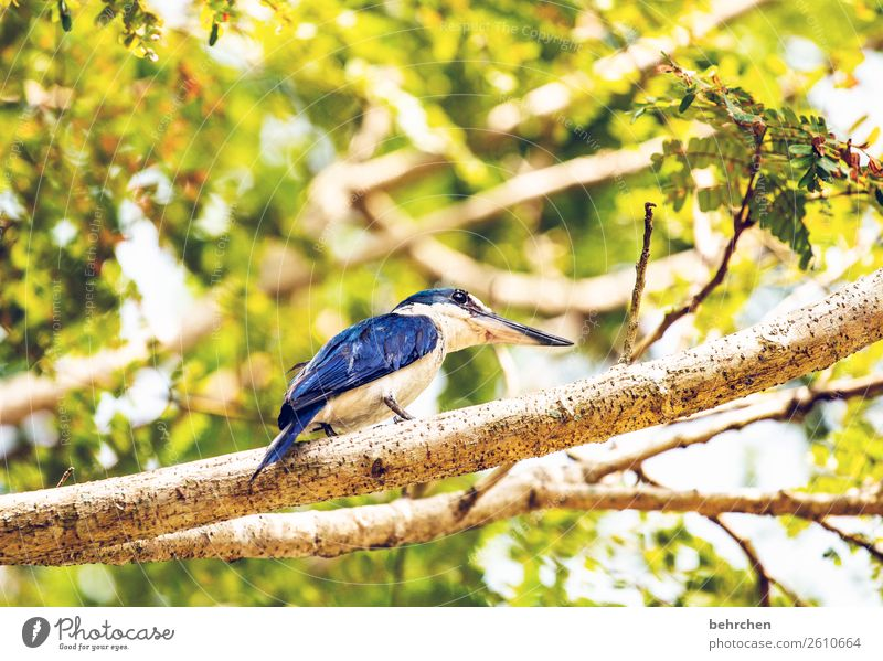 the early bird Vacation & Travel Tourism Trip Adventure Far-off places Freedom Nature Tree Leaf Animal Bird Wing Kingfisher kighfisher Feather 1 Exceptional
