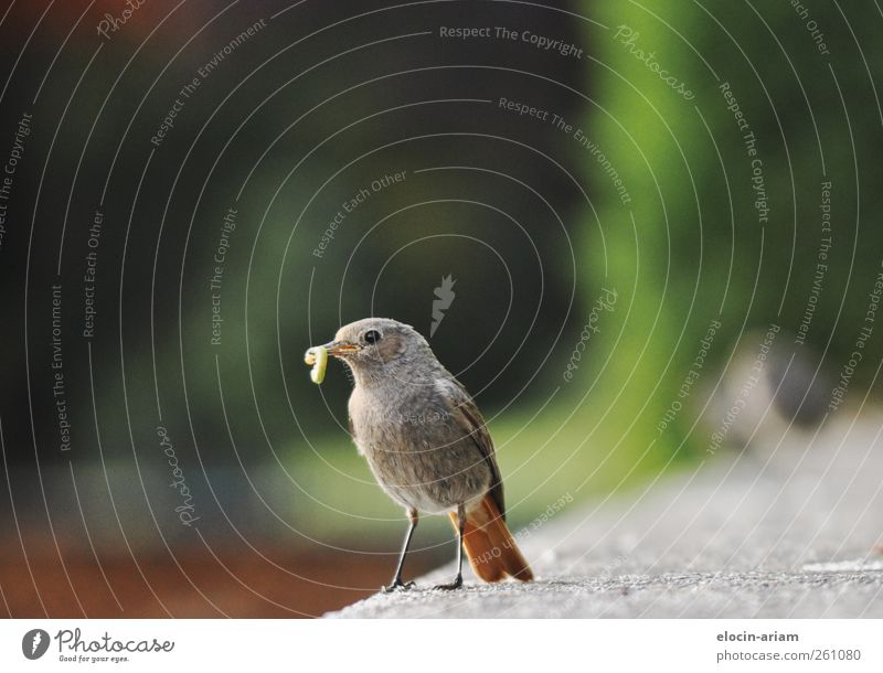 Nature Green Animal Wall (barrier) Bird Cute Appetite Delicious To feed Feeding Love of animals Worm