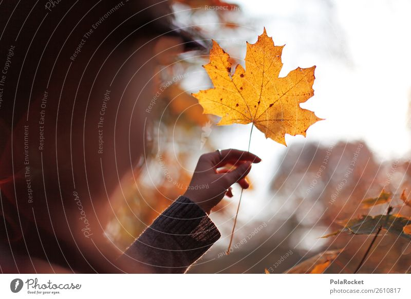 #A# Autumn Gold Nature Beautiful weather Esthetic Weather Leaf Deciduous forest Autumnal Autumn leaves Autumnal colours Early fall Automn wood Autumnal weather