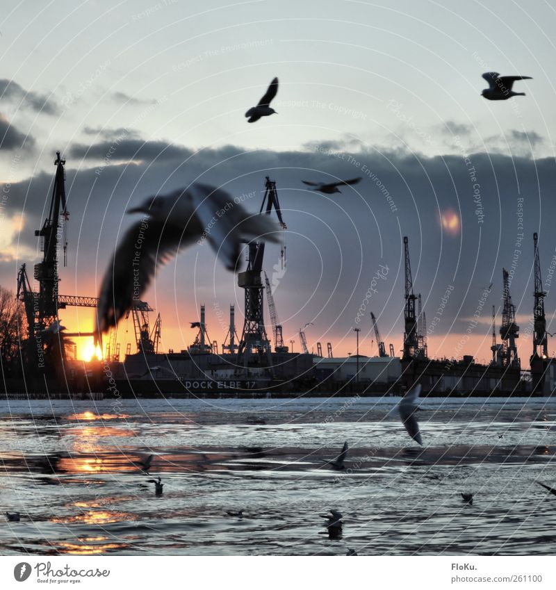 Water City Winter Bird Flying Happiness Hamburg Group of animals Harbour Beautiful weather Navigation Seagull Dazzle Surface of water Elbe Flock