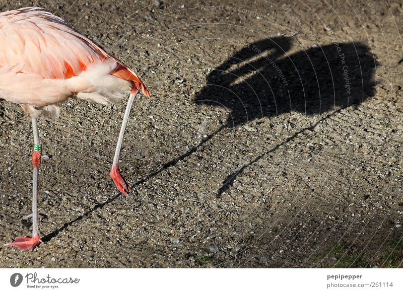 PARANOIA Summer Park Lakeside Pond Animal Wild animal Bird Flamingo Wing Claw Paw Animal tracks Zoo 1 Stone Observe Movement Going Pursue Shadow Legs