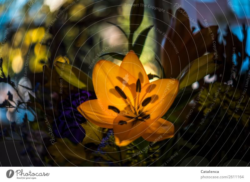 Bouquet of flowers with lily Nature Plant Flower Leaf Blossom Lily Blossoming Beautiful Blue Yellow Green Violet Orange Moody Friendship Love Infatuation