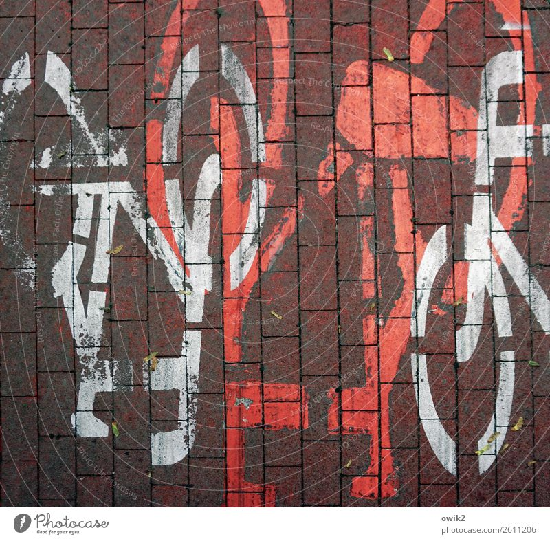 Who has right of way? Transport Traffic infrastructure Cycle path Poland Bicycle Paving stone Cobbled pathway Sign Signs and labeling Under Crazy Red White