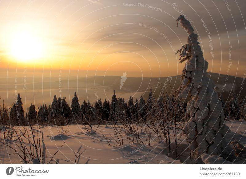Nature Tree Vacation & Travel Plant Sun Winter Black Yellow Landscape Snow Mountain Gray Snowfall Gold Trip Adventure