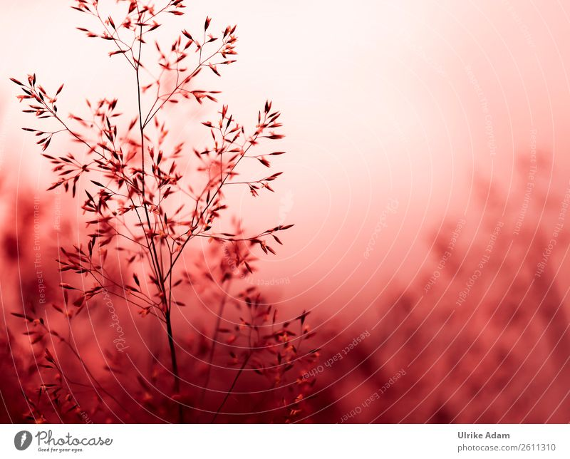 Nature Summer Plant Red Relaxation Calm Winter Autumn Interior design Blossom Style Grass Feasts & Celebrations Design Contentment Decoration