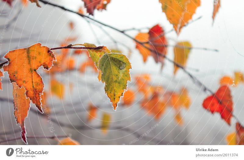 Colourful leaves - nature in winter Style Design Wellness Harmonious Well-being Contentment Relaxation Calm Meditation Decoration Wallpaper Nature Plant Autumn