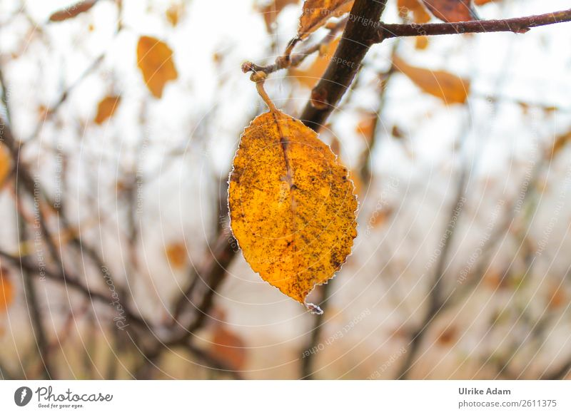 Nature Plant Tree Relaxation Loneliness Leaf Winter Autumn Yellow Sadness Orange Design Contentment Transience Individual Change