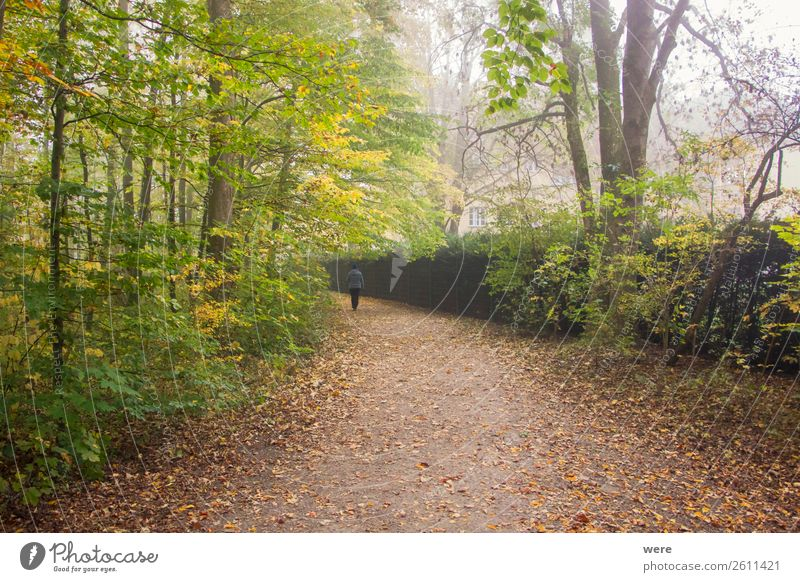 Lonely hiker on a foliage covered hiking trail in autumn Nature Walking Hiking Contentment branches copy space dirt road fog folio forest landscape lonely