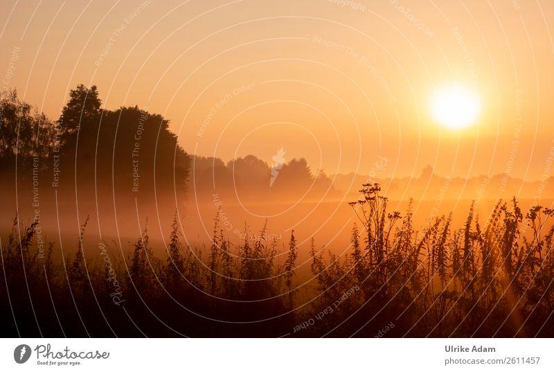 Mystic sunrise Design Wellness Harmonious Well-being Contentment Relaxation Meditation Spa Interior design Decoration Wallpaper Image Landscape Plant Autumn Fog