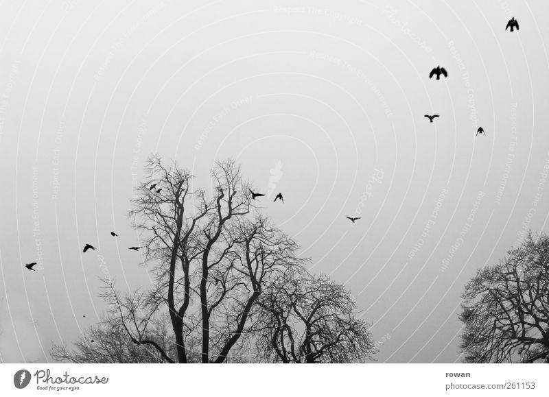 fog flight Tree Bird Flock Flying Threat Dark Creepy Cold Gloomy Sadness Fog Raven birds Flight of the birds Branch Branchage Gray Black & white photo