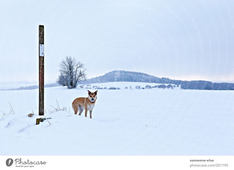 Dog White Winter Animal Loneliness Cold Landscape Snow Mountain Field Hiking Adventure Hill Watchfulness Snowcapped peak Patient
