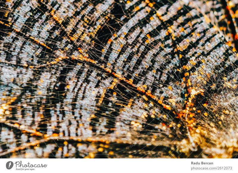 Monarch Butterfly Wings Abstract Pattern Close Up Nature Summer Colour Beautiful Animal Black Environment Natural Style Orange Brown Design Wild Decoration
