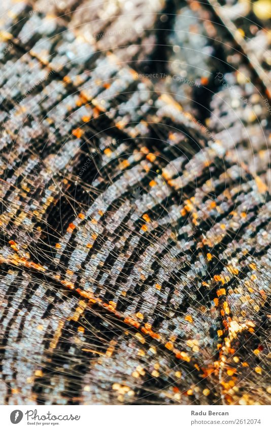 Monarch Butterfly Wings Abstract Pattern Close Up Design Exotic Beautiful Summer Decoration Environment Nature Animal Wild animal 1 Authentic Exceptional Bright