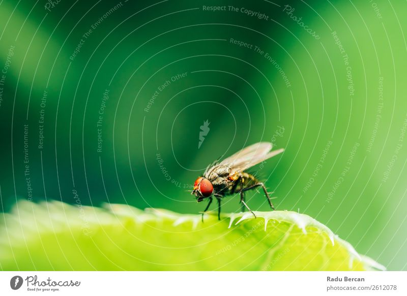 Housefly On A Leaf In Garden Nature Summer Plant Colour Beautiful Green Red House (Residential Structure) Animal Forest Environment Natural Grass Small