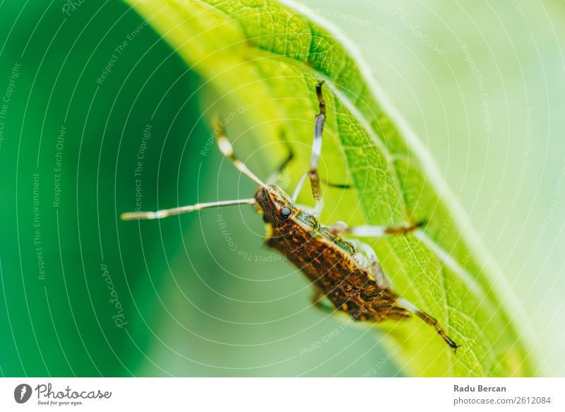 Shield Bug Macro In Garden Summer Environment Nature Plant Animal Leaf Park Wild animal Beetle Animal face 1 Discover Feeding Crawl Simple Creepy Small Natural