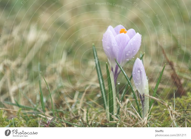 Nature Plant Beautiful Blossom Spring Meadow Natural Fresh Beginning Blossoming Romance Violet New Bud Anticipation Blossom leave