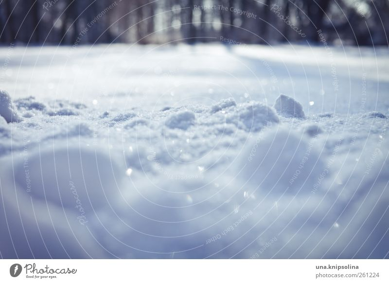 sugared Environment Nature Winter Weather Beautiful weather Ice Frost Snow Park Meadow Glittering Illuminate Cold Natural White Snowscape Snow layer
