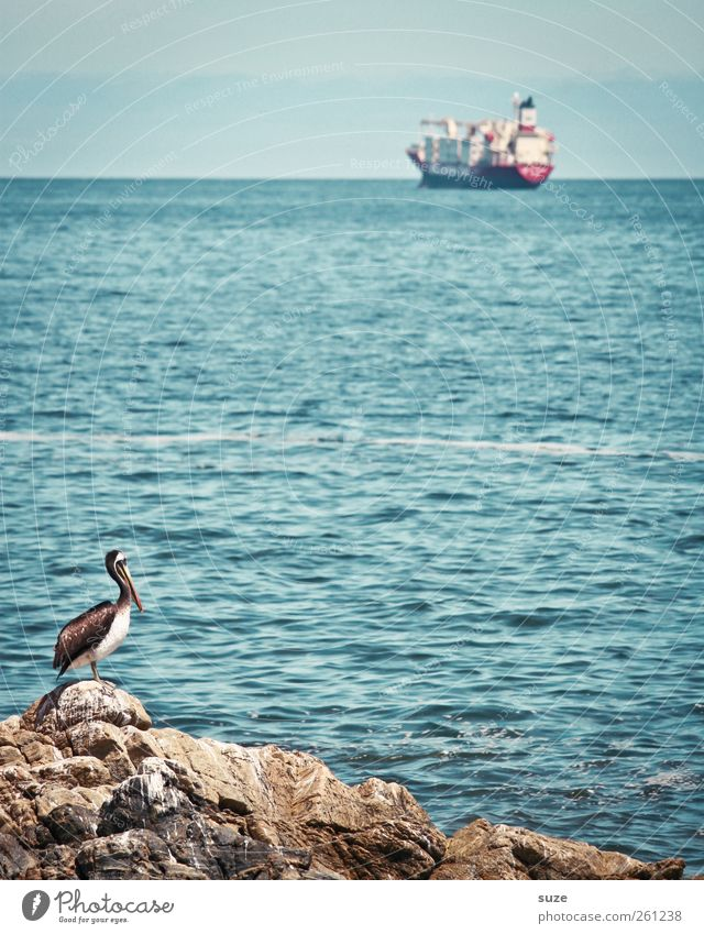 Sky Nature Water Blue Ocean Animal Environment Landscape Coast Watercraft Horizon Bird Rock Wild animal Industry Threat