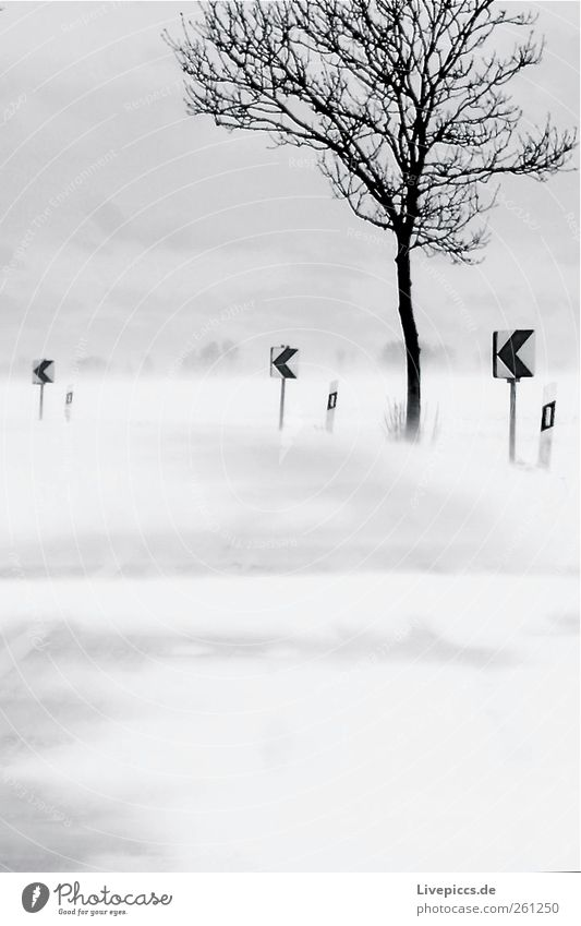 anticlockwise Environment Nature Winter Bad weather Wind Gale Snow Snowfall Tree Transport Street Shield Gray Black White Snowstorm Black & white photo